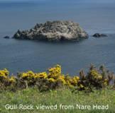 Cornwall-roseland-naturenotes5