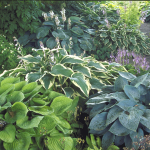 cornwall-roseland-gardening-5