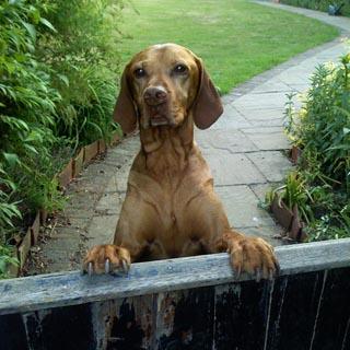 cinnamontrust-dog