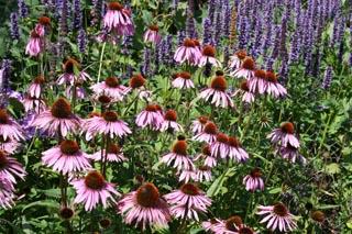 gardening-roseland-peninsula-1