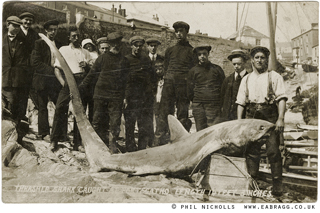 e a bragg, thresher shark, portscatho