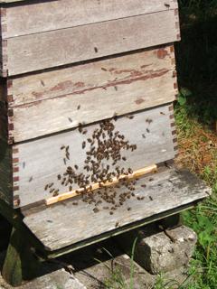 Bee-ManiaSept2014-2
