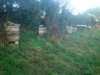 Top rank, field apiary, December 2014