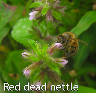naturenotes4