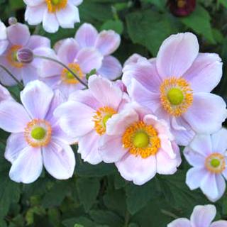 gardening-0515-5