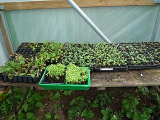 gardening-06.15-1