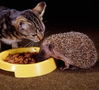 Hedgehogcatfood