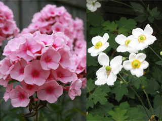 gardening04.16-2