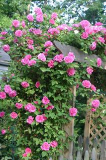 gardening04.16-4