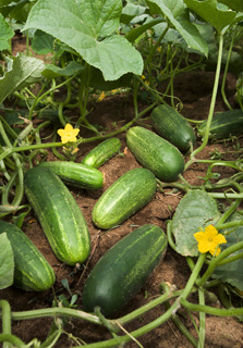 gardening04.16-7