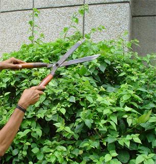 gardening06.16-1