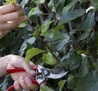 gardening06.16-4