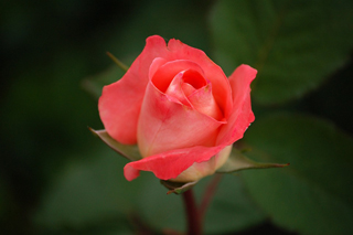 gardening06.16-5