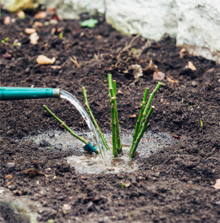 gardening06.16-6