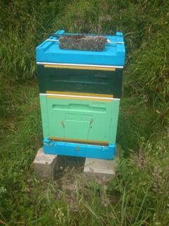 Bee-Mania-07.16-1