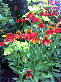 gardening08.16-4