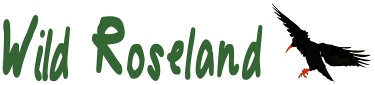 WildRoselandLogo