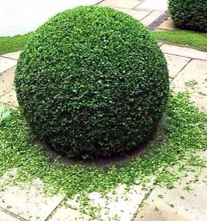 gardening-07-3
