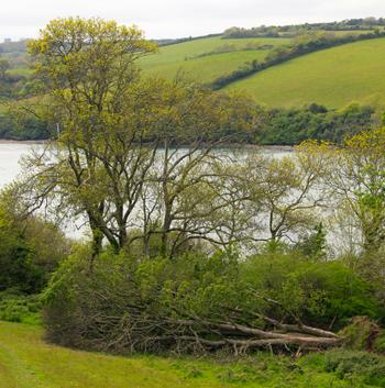 Cornwall-roseland-naturenotes2