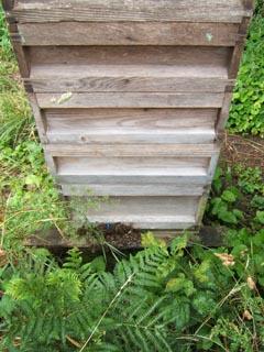 cornwall-roseland-beekeeping-1