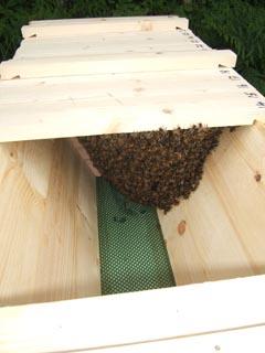 cornwall-roseland-beekeeping-4