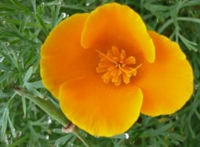 cornwall-roseland-gardening-2