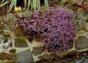 floweringheathers
