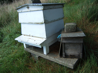 Bee-ManiaSept2014-1