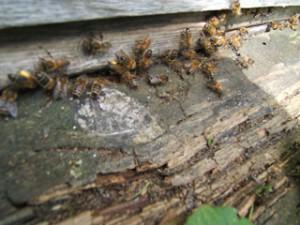 Bee-ManiaSept2014-5