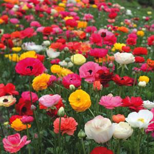 gardening-06.15-3