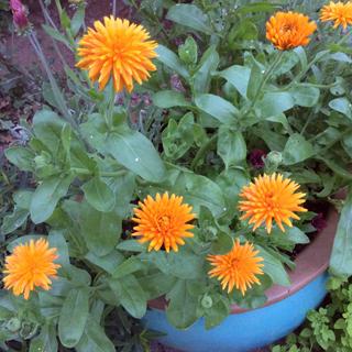 gardening08.16-1